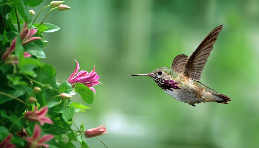 Hummingbird Consciousness